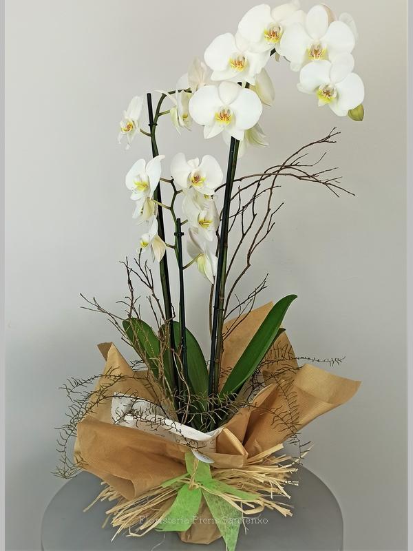 Orquídea envío a domicilio