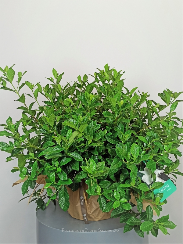 Planta de exterior con flor
