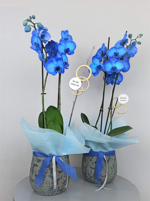 orquidea azul