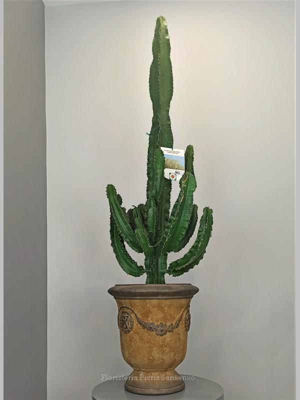 Cactus Espectacular