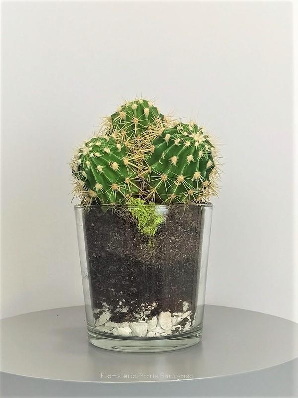 Echinocactus grussoni