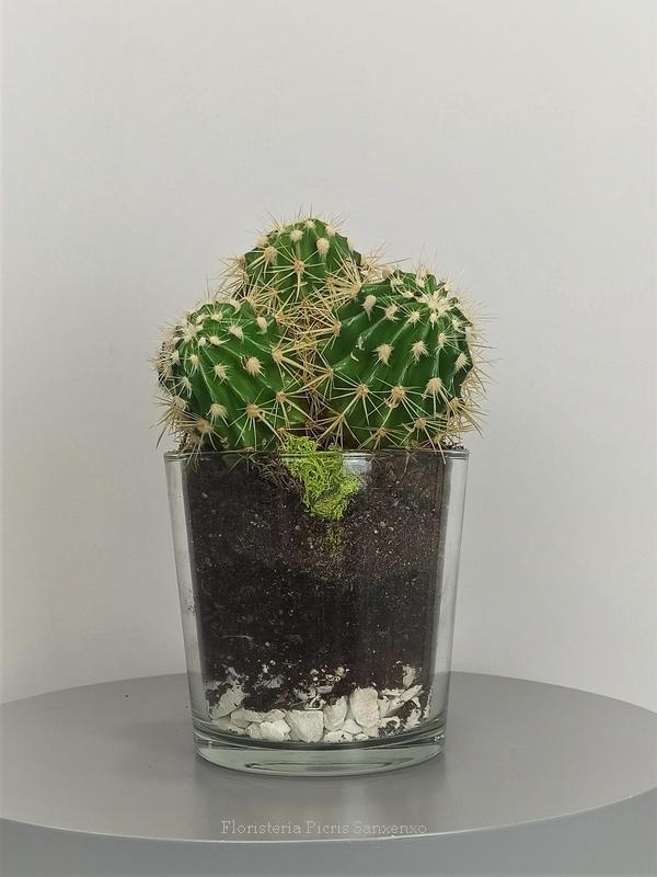 cactus echinocactus