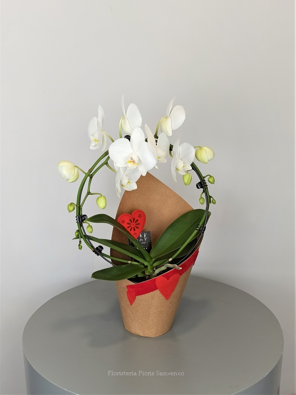 orquidea arco blanco