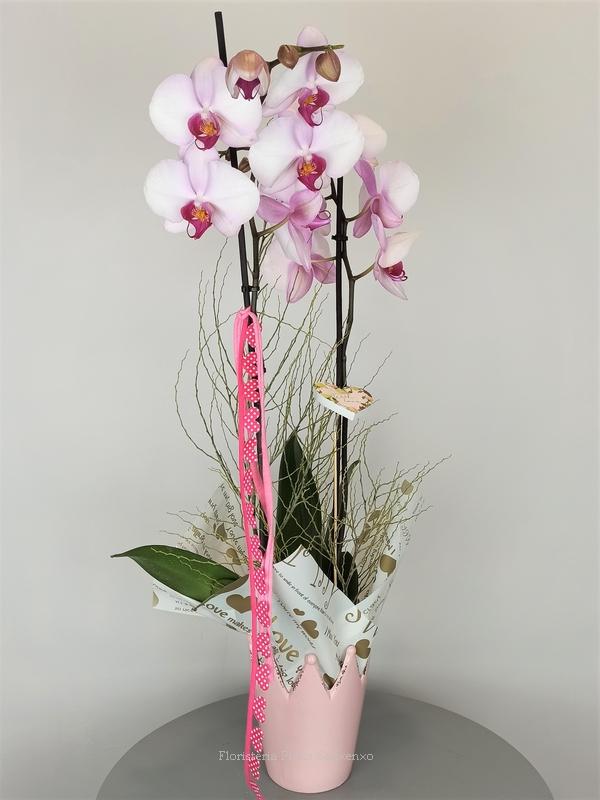orquidea rosita