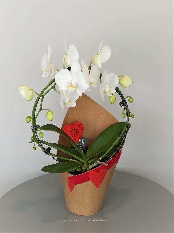 orquideas arco blanco