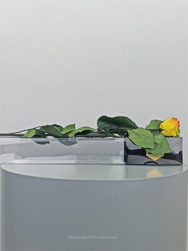Rosa Arcoiris Alargada