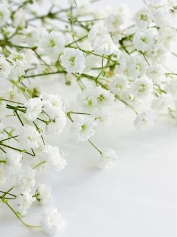 Paniculata blanca