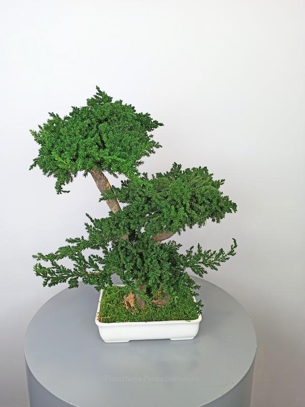 bonsai preservado 50