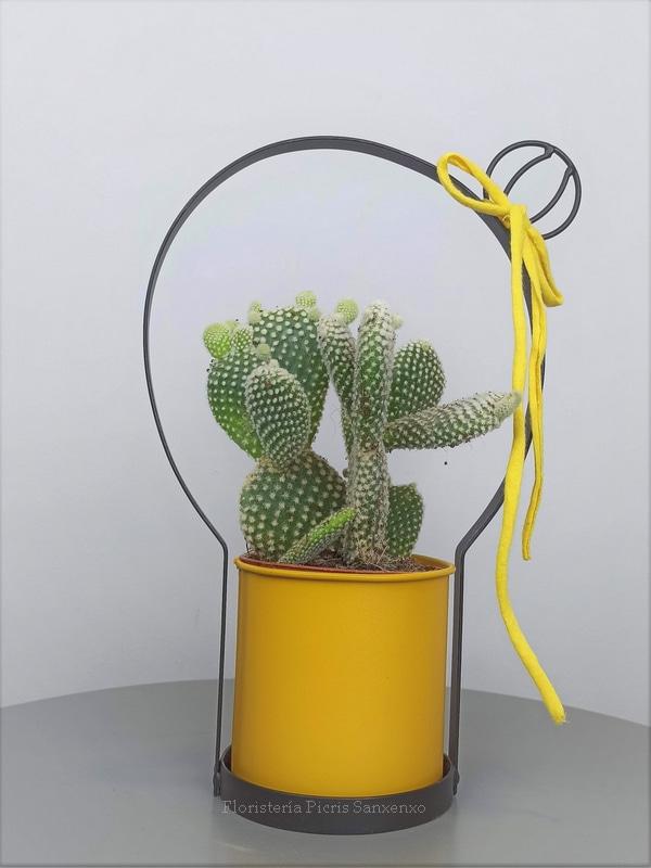 cactus al cuadrado