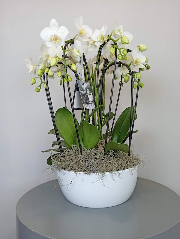 cascada de orquideas