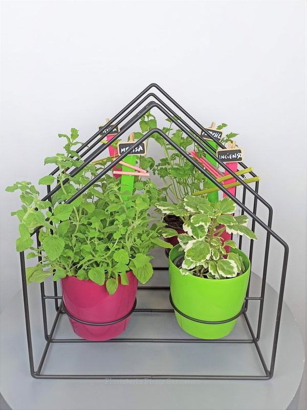 plantas aromáticas para regalo