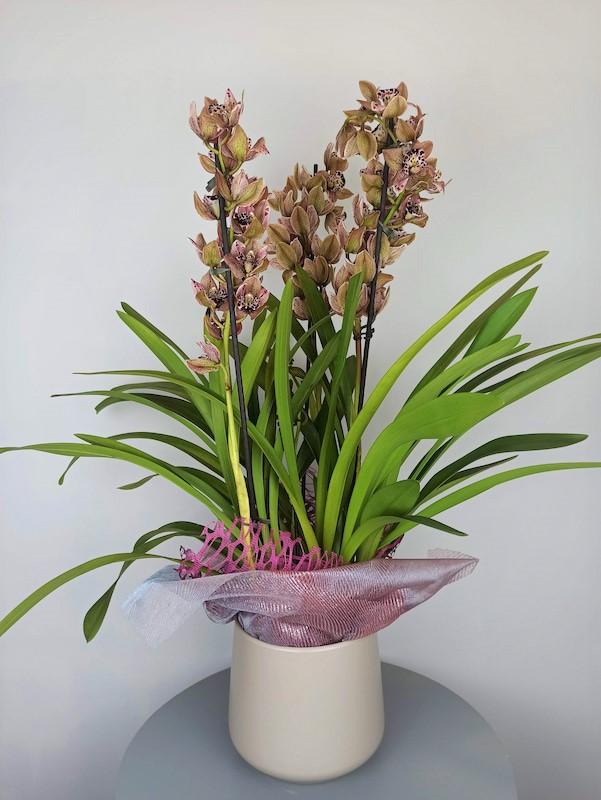 Orquidea Especial Cymbidum
