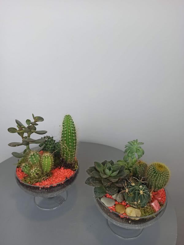 copa con cactus