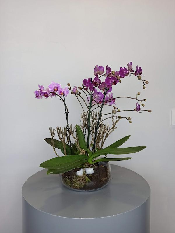 mini orquideas