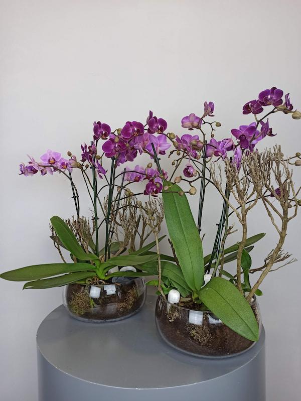 orquidea mini cristal
