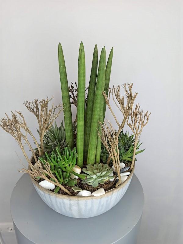 centro plantas suculentas