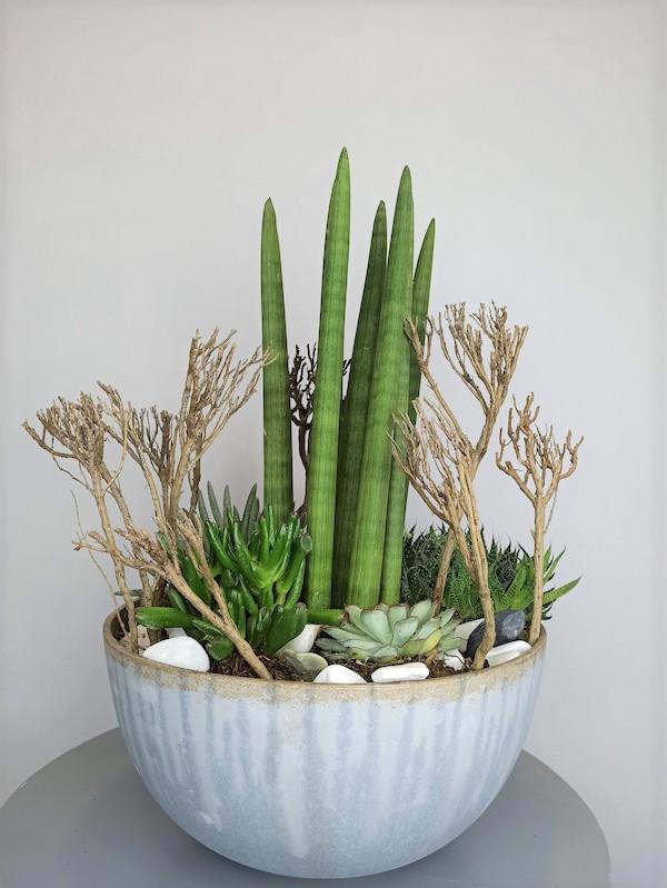 composicion plantas crasas