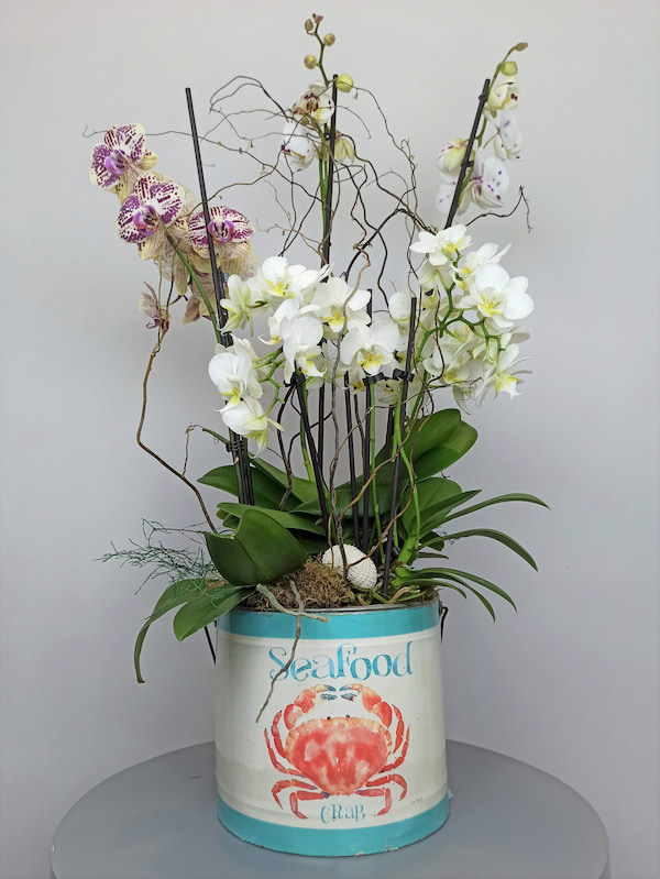 planta orquidea o grove (1)