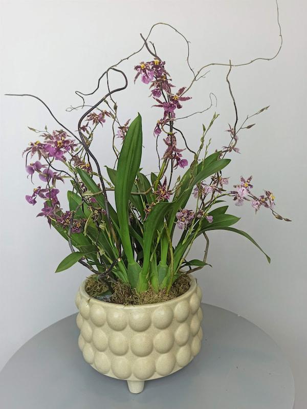 orquideas con olor